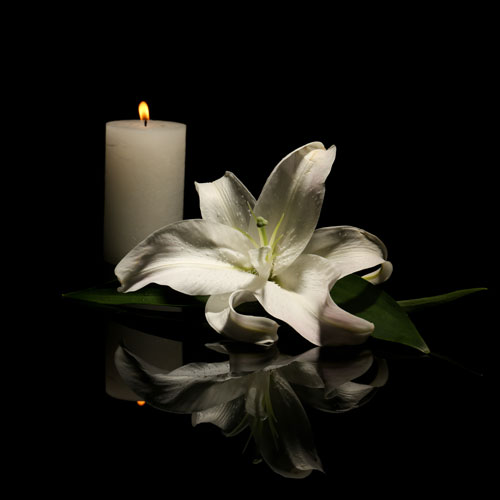 A white flower and candle.